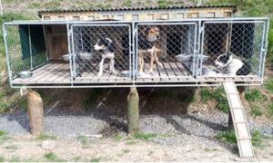 牧場の犬小屋