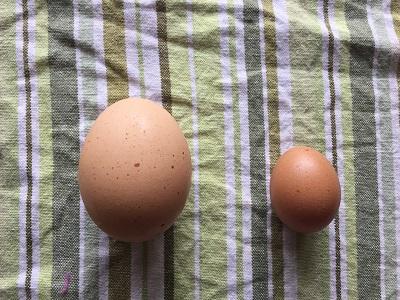 small chicken egg