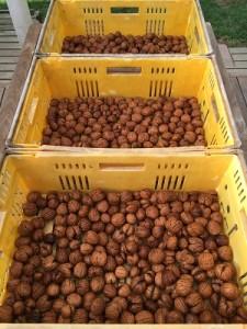 get the wallnuts